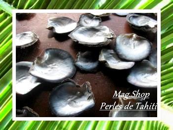 DOCUMENTATION NACRE DE TAHITI MAG.SHOP