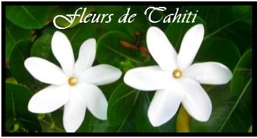 COLLECTION FLEURS DES ILES  MAG.SHOP TAHITI