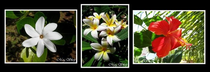 FLEURS DE POLYNESIE MAG.SHOP TAHITI PERLES