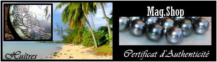 Huîtres Gravées de Collection Tortue - Nacres de Tahiti MAG.SHOP